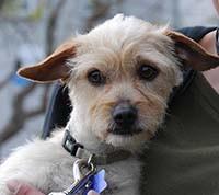 Best Dog Trainer San Francisco