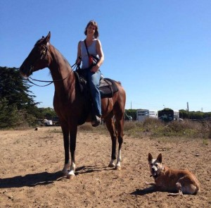 sf dog connect horse training