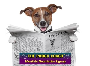 The Pooch Coach SF Dog Connect Newsletters